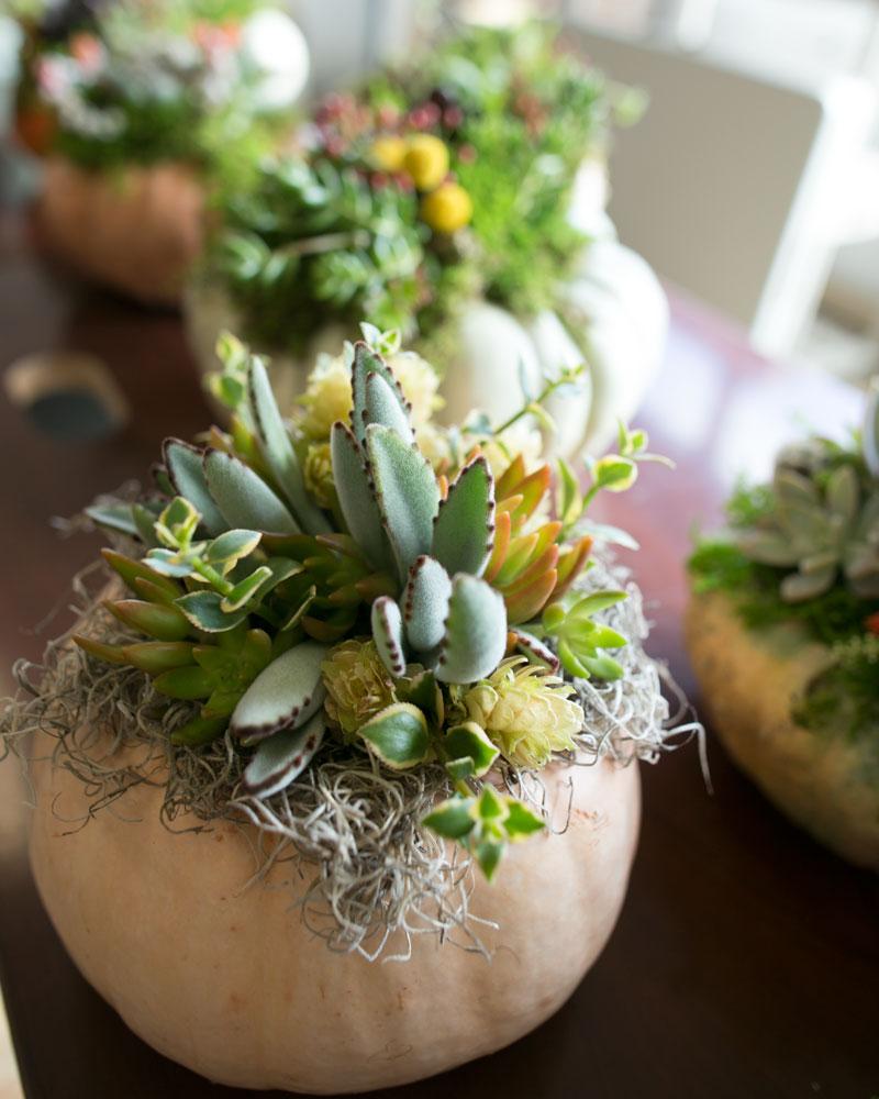 DIY Succulent Cinderella Pumpkins