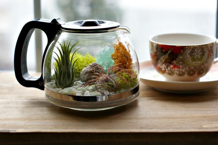 Make a Coffee Pot Terrarium