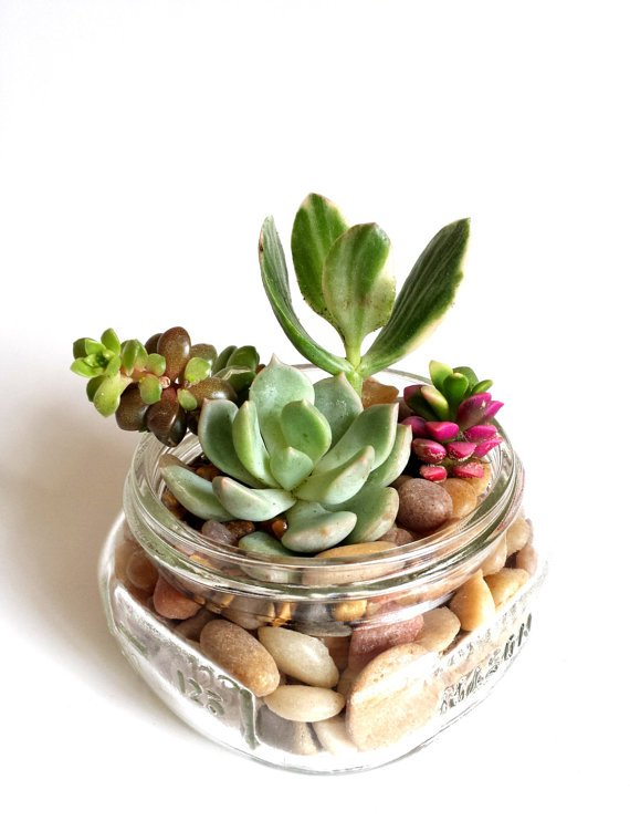 Mason Jar With Succulent Plants