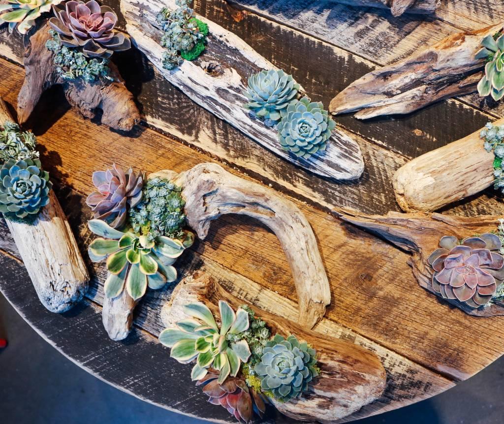 Succulent Driftwood DIY