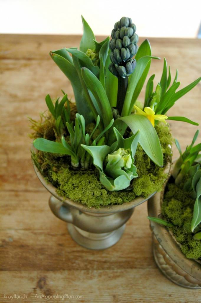 How to Create A Spring Bulb Centerpiece